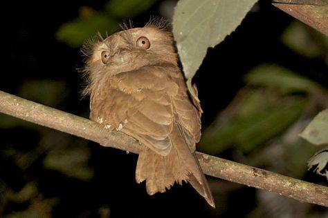 Thattekad Bird Sanctuary, Thattekad, India