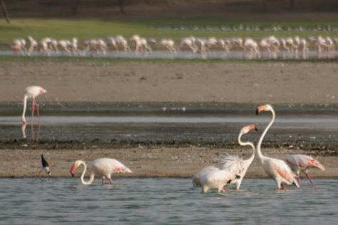 Thol Lake Bird Sanctuary, Kalol, India