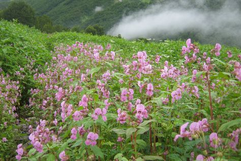 Valley of Flowers National Park, Uttarakhand, India