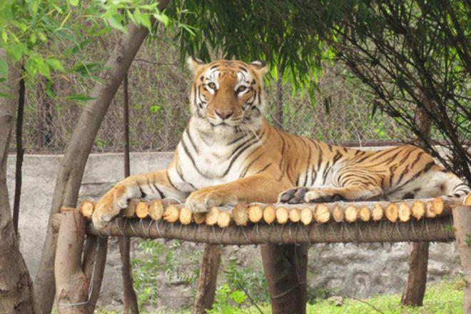 Adler Tours & Safaris, Rajkot, India