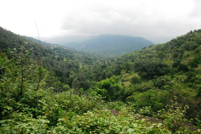 Attapadi Reserve Forest, Palakkad, India