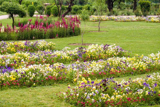 Badamwari Garden, Srinagar, India