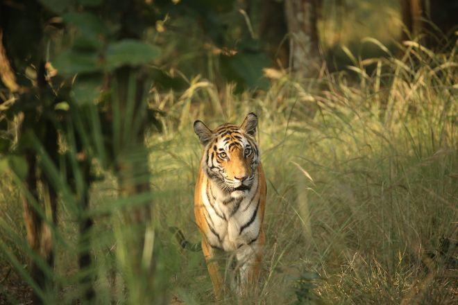 Bandhavgarh National Park, Bandhavgarh National Park, India