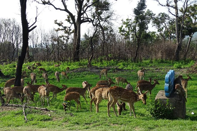 Bandipur National Park and Tiger Reserve, Bandipur, India