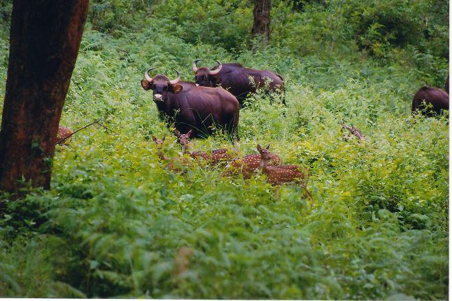 Biligirirangan Hills, Bandipur, India