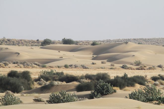 Desert National Park, Jaisalmer, India
