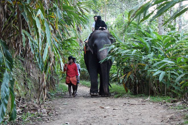 Elephant Junction, Thekkady, India