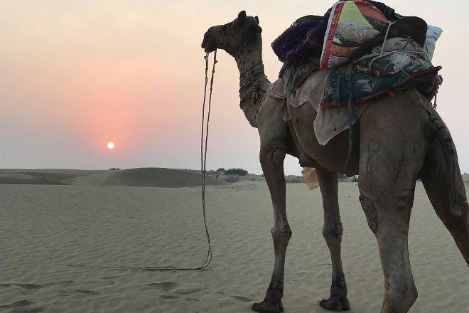Fifu Camel Safaris, Jaisalmer, India