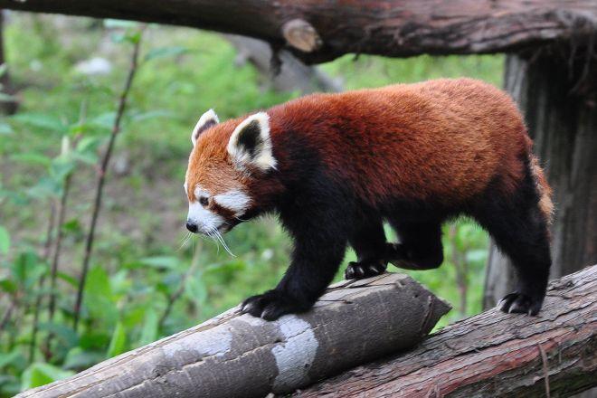 Himalayan Zoological Park, Gangtok, India