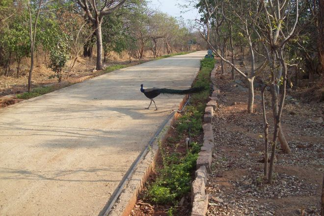 KBR National Park, Hyderabad, India