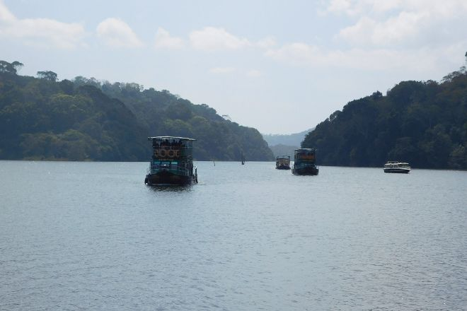 Periyar Tiger Reserve forest, Thekkady, India
