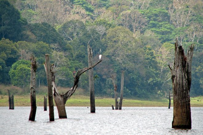 Periyar Wildlife Sanctuary, Thekkady, India