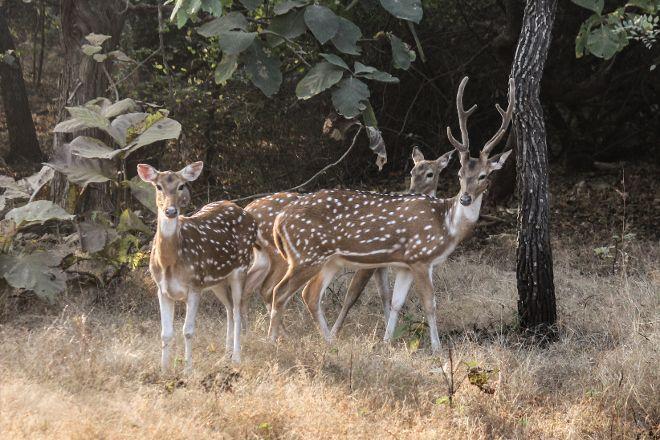Sasan Gir National Park, Sasan Gir, India