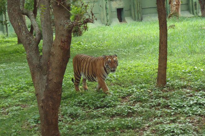 Sri Chamarajendra Zoological Gardens, Mysuru (Mysore), India