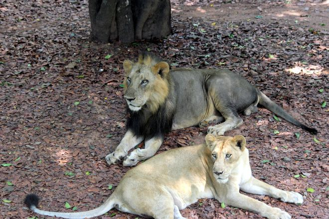 Thiruvananthapuram Zoo, Thiruvananthapuram (Trivandrum), India