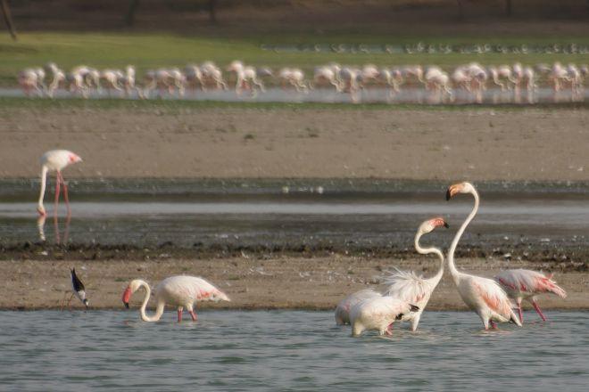 Thol Lake Bird Sanctuary, Mehsana, India