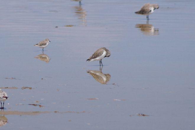 Water Bird Sanctuary, Rameswaram, India