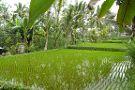 Authentik Bali - Day Tours
