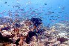 Maleo Moyo Diving