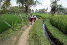 Ubud Kajeng Rice Fields Walk
