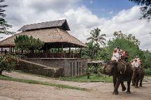 Bali Elephant Tour