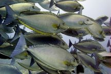Blue Marlin Dive Komodo