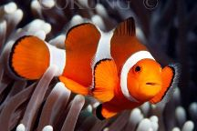 Euro Dive Bali