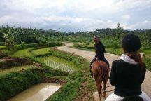 Havana Horses, Salatiga, Indonesia