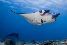 La Manta Diving Bali