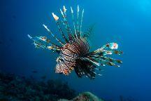 Manta Dive, Gili Trawangan, Indonesia