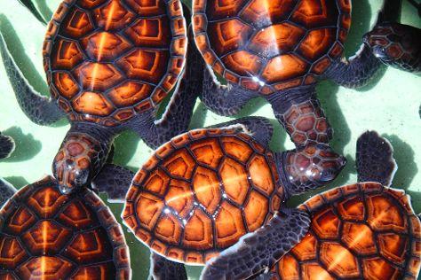 Gili Meno Turtle Sanctuary, Gili Meno, Indonesia