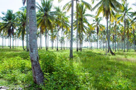 Sawarna Beach, Bayah, Indonesia