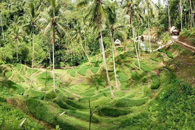 Alas Harum Agro Tourism, Tegalalang, Indonesia