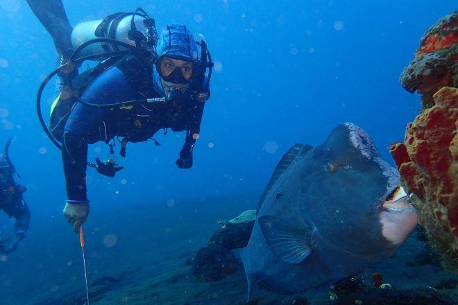 Aqua Dive Paradise, Tulamben, Indonesia
