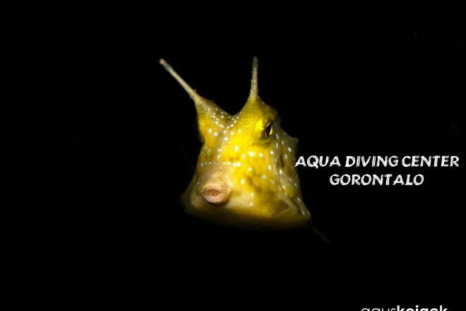 Aqua Diving Center Gorontalo, Gorontalo, Indonesia