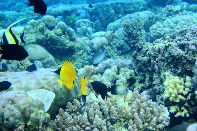 Bunaken National Marine Park, Bunaken, Indonesia
