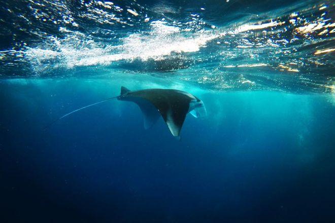 Current Junkies Diving, Labuan Bajo, Indonesia