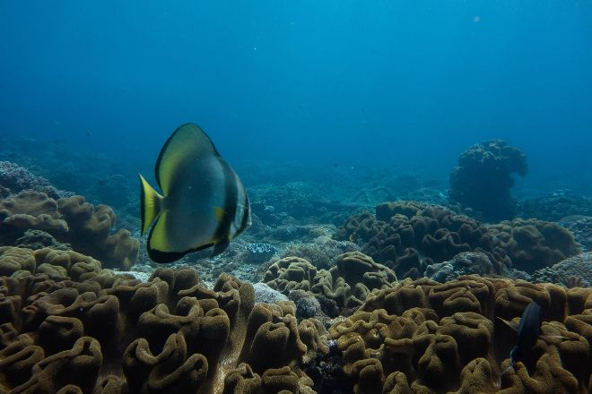 Drift Divers Lembongan, Nusa Lembongan, Indonesia