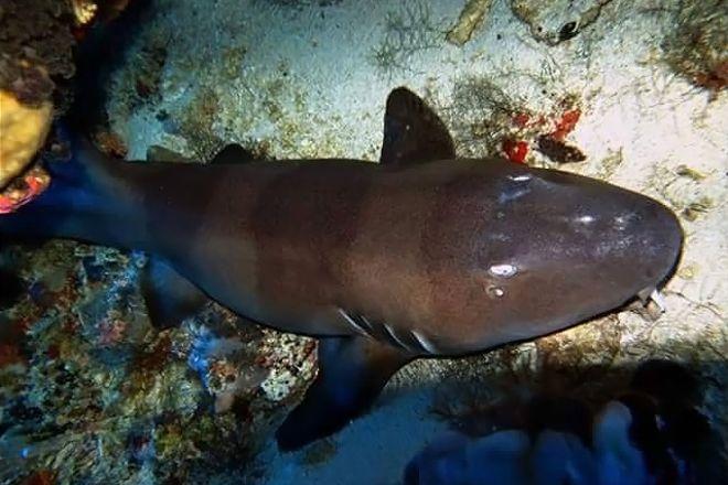Indo Divers Lembongan, Nusa Lembongan, Indonesia
