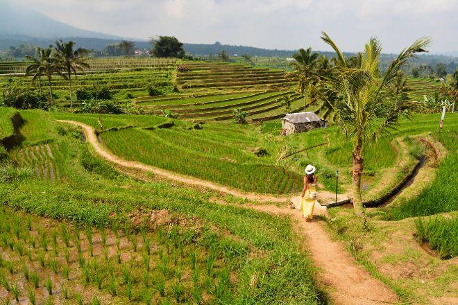 Jatiluwih Green Land, Tabanan, Indonesia