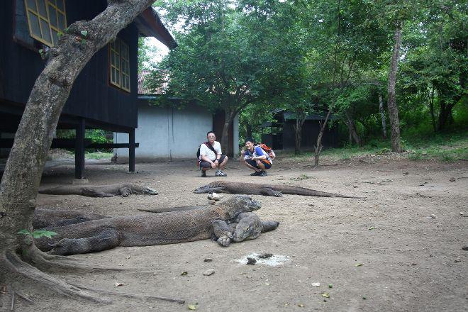 Komodo, Komodo National Park, Indonesia