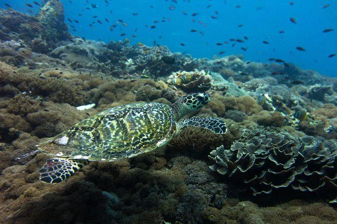 Lembongan Snorkeling Trips, Nusa Lembongan, Indonesia