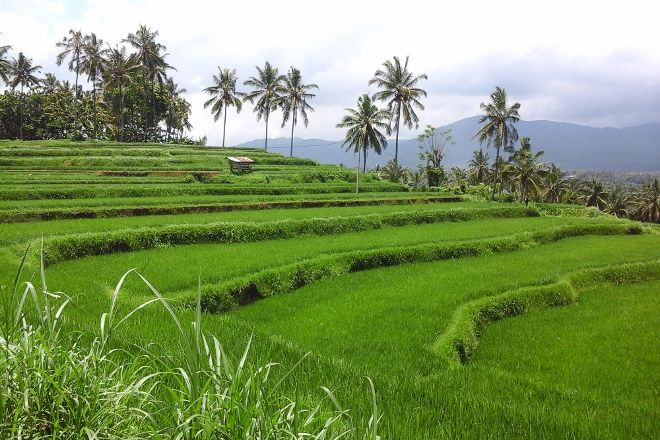 Mayong Cultural Walk, Mayong, Indonesia