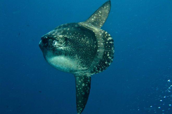 Mola Mola Dive Lembongan, Nusa Lembongan, Indonesia