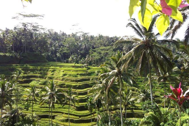 Mr. Bedu's Tours, Ubud, Indonesia