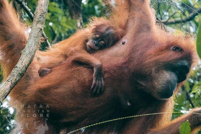 Sumatra Orangutan Explore, Bukit Lawang, Indonesia