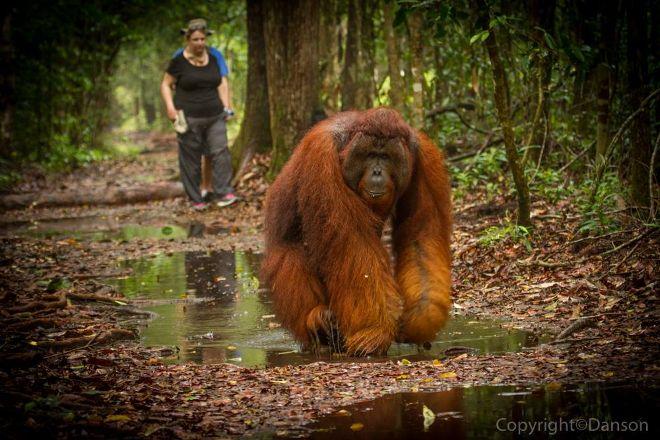 Tanjung Puting Borneo Tour, Pangkalan Bun, Indonesia