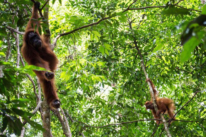 The Bohorok Orangutan Centre at Bukit Lawang, Bukit Lawang, Indonesia