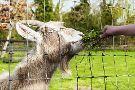 Clonfert Pet Farm