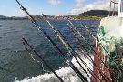 Dingle Boat Tours